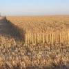 Records breaking as Harvest progresses south