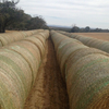 1000 rolls of oaten and rye 5x4