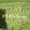 CHaff Quality Lucerne Hay in 8x4x3 Squares Wanted