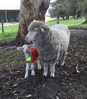 Complete Sheep Maintenance Blend