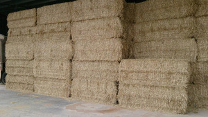 Barley Straw For Sale in 8x4x3's , 450 of