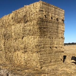 8x4x3 rice straw/tailing bales