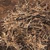 250 Bales of Sugarcane Trash