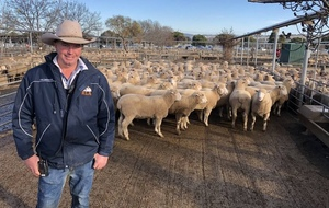 Video - Lambs make $258.20 at Wagga Wagga