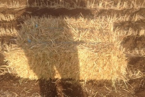 Small square bales of wheaten hay