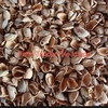 Almond Hulls For Sale @ Delivered Price - Good Source Of Energy