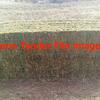 New Season Vetch Hay  300  8x4x3 approx 550 kg