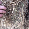 Vetch Hay For Sale in 8x4x3's