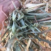 Oaten Hay Squares For Sale - Good colour