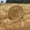 2018 Rye Grass Hay