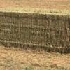 Vetch Hay ( New Season ) 8x4x3 -744 x 600 KG Approx Bales & Shedded