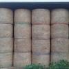 200 x Rolls irrigated lucerne, shedded. $250 / tonne + GST