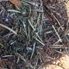 New Season Vetch Hay For Sale in 8x4x3's - B1 AFIA Grade - Our 3rd Grade ** Quick Sale Paddock Stacked **