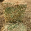 Cereal hay