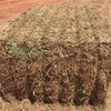 Vetch Hay 8x4x3 - 200 m/t ##Payment Options 50% On Pick Up 50% July August ##