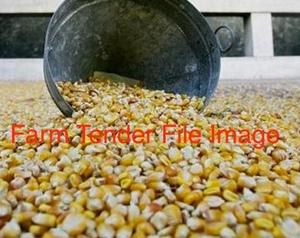 100mt of corn
