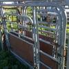 Galvanised Cattle Crush / Head Bail