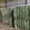 Quick Sale - 44/mt or 1 x B Double load of Lucerne Hay - 20-22% Moisture