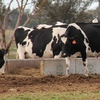 Concrete Ag-Crete 3m Feed Troughs - Best Design for Cattle Feedlots - Ag-Crete