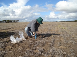 WA to get $14.6 million of funding for soil and crop nutrition research