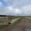 Share Farmer for Feedlot Rental (up to 1,000 cows)