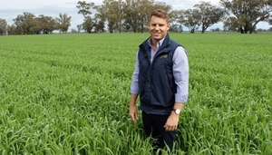 Cutlass Wheat to provide option for Southern NSW Grower in 2018