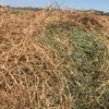 New Season Vetch Hay For Sale in 8x4x3's