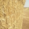 2019 Wheaten Straw - HD bales - 45 min from VIC/NSW border