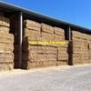 Barley Hay 8x4x3 - 1,350 x 600 KG Approx Bales & All Shedded