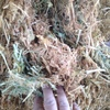 PEA HAY FOR SALE IN 8x4x3'. 240 bales