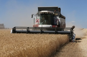 World Grain Report - Uncertainty hounds the Russia wheat market…