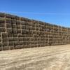 Vetch Hay 8x4x3 - 500 x 600 KG Approx Bales