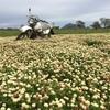 New Season Balansa Clover Hay - Rolls