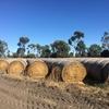 5x4 Rolls Barley-Vetch-Oaten Hay