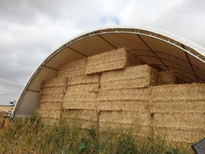 Windrowed Wheat Straw