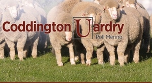 Coddington Uardry Poll Merinos to $9,500