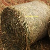 Sourghum Hay Super Dan 2 Round Bales 4ft x 170