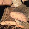 Iron Bark Firewood For Sale