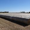 Rye Grass Hay 5 x 4 rolls