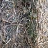 Vetch Hay 8x4x3 - 370 x 590 KG Approx Bales & Shedded