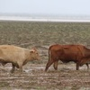 Decades to recover - Leadership needed to guide cattle industry through darkest days