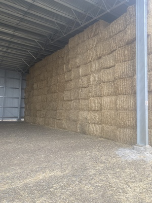Barley Header Tailings  8x4x3 Bales  Approx 2000 mt  Shedded