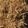 Barley straw