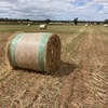 Grass hay. 4 x 4 Round Bales (new season).