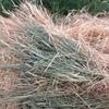 Barley / Lucerne Hay Rolls For Sale