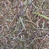 Vetch Hay