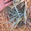 Good Oaten Hay for sale in 8x4x3's
