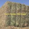 Vetch/Pasture Clover & Cereal Hay 8x4x3 Bales