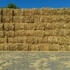 Oaten Hay For Sale in 8x4x3's - Must Sell ASAP! Make An Offer?