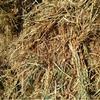 Old Season Oaten Hay For Sale in 8x4x3's